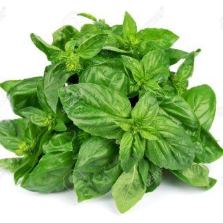 basil-leaves-fresh